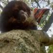 Gatto su albero, muso incastrato nel pacchetto patatine 3