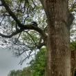 Gatto su albero, muso incastrato nel pacchetto patatine 2