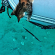 Liz Clark e la sua gattina in barca in giro per il mondo FOTO 2