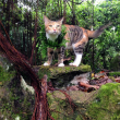 Liz Clark e la sua gattina in barca in giro per il mondo FOTO 3