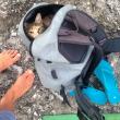 Liz Clark e la sua gattina in barca in giro per il mondo FOTO 4