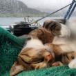 Liz Clark e la sua gattina in barca in giro per il mondo FOTO 6