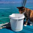 Liz Clark e la sua gattina in barca in giro per il mondo FOTO 8