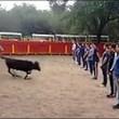 Toro corre intorno alle persone ferme5