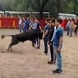 Toro corre intorno alle persone ferme4