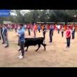 Toro corre intorno alle persone ferme
