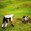 Vive un anno con le capre sulle Alpi svizzere12