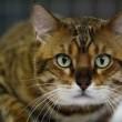 Viano, gatta trovata in fin di vita: le sparano con crudeltà