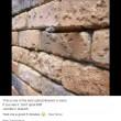 Illusione ottica, cosa si nasconde nel muro di mattoni4