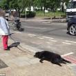 Cammina in strada trascinando il suo cane morto4