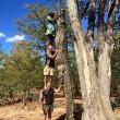 Catturato coccodrillo lungo come 3 uomini in piedi