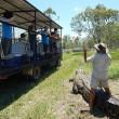 Cavalca coccodrilli davanti ai turisti a 65 anni 7