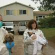 Coppia con 270 cani: casa piena di urina e pulci3