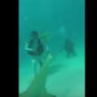 VIDEO YOUTUBE Squali, come si sopravvive ad un attacco4