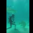 VIDEO YOUTUBE Squali, come si sopravvive ad un attacco5