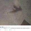 YOUTUBE Turchia, a Istanbul kamikaze all'aeroporto Ataturk: 10 morti