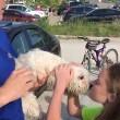 Spaccano vetro auto per liberare cane disidratato2