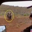 Rinoceronte nero non ama essere fotografato e punta l'auto 4