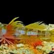 VIDEO YOUTUBE Pesce Godzilla scoperto nel Mar dei Caraibi 4