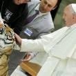 Papa Francesco accarezza una tigre dei circensi FOTO