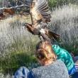 Aquila aggredisce con gli artigli bambino di 7 anni2