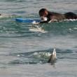 Australia, squalo a riva: surfisti escono di corsa dall'acqua FOTO