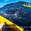 YOUTUBE Megattera intrappolata nella rete da pesca chiede aiuto a canoisti 2
