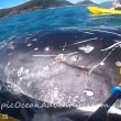 YOUTUBE Megattera intrappolata nella rete da pesca chiede aiuto a canoisti
