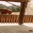 Elefante uccide accidentalmente bimba di 7 anni4
