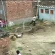 Leopardo assale 2 villaggi in India 10 feriti 3