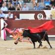 Madrid, torero incornato nella Plaza de Toros6