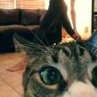 Padrona si riprende mentre fa yoga, gatto abbatte telecamera2