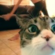 Padrona si riprende mentre fa yoga, gatto abbatte telecamera