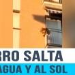 Cane chiuso in balcone senza acqua e cibo3