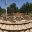 Corato-Andria: scontro fra treni, 20 morti e diversi feriti FOTO-VIDEO