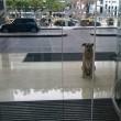 Il cane randagio che aspetta 6 mesi la hostess fuori dall'hotel 7