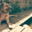 Il cane randagio che aspetta 6 mesi la hostess fuori dall'hotel 2
