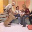 Messico, leone cerca di aggredire bambina in diretta9