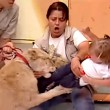 Messico, leone cerca di aggredire bambina in diretta6
