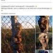 Ungheria, fantocci anti-immigati con teste mozzate5