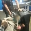 Brasile, polizia trova 11enne nella valigia