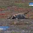 Siberia, infezione da antrace: muore bimbo di 12 anni, 90 ricoverati 3