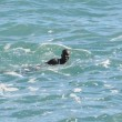 Ventimiglia, migranti sfondano confine: a nuoto fino in Francia, occupano scogliera04