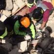 Terremoto: gatto Pietro vivo dopo 16 giorni sotto le macerie2