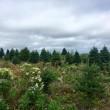 Canada, isola disabitata cerca lavoratori: ti regalano la terra ma...