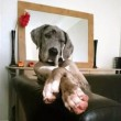 """VIDEO YOUTUBE Cibo ovunque, la divertente espressione del cane: """"Non sono stato io"""""""