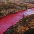 VIDEO YOUTUBE Fiume rosso sangue in Russia: sostanze chimiche nell'acqua