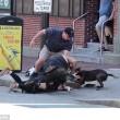 VIDEO YOUTUBE Il terribile attacco del pit bull al cucciolo di beagle 5