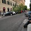 Maltempo Roma, albero crolla a ingresso scuola. Pino marittimo su auto a Talenti