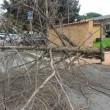 Maltempo Roma, albero crolla a ingresso scuola. Pino marittimo su auto a Talenti 3
